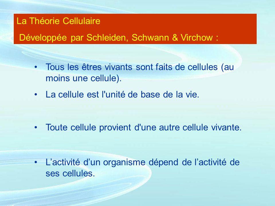 La Théorie Cellulaire Développée par Schleiden, Schwann & Virchow : Tous les êtres vivants sont faits de cellules (au moins une cellule). La cellule e