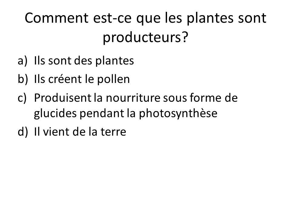 Comment est-ce que les plantes sont producteurs? a)Ils sont des plantes b)Ils créent le pollen c)Produisent la nourriture sous forme de glucides penda