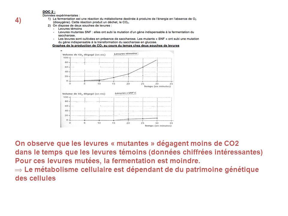 4) On observe que les levures « mutantes » dégagent moins de CO2 dans le temps que les levures témoins (données chiffrées intéressantes) Pour ces levu