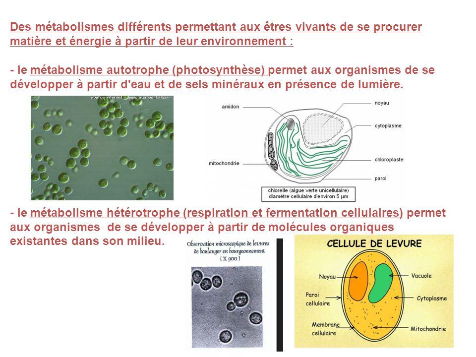 Des métabolismes différents permettant aux êtres vivants de se procurer matière et énergie à partir de leur environnement : - le métabolisme autotroph