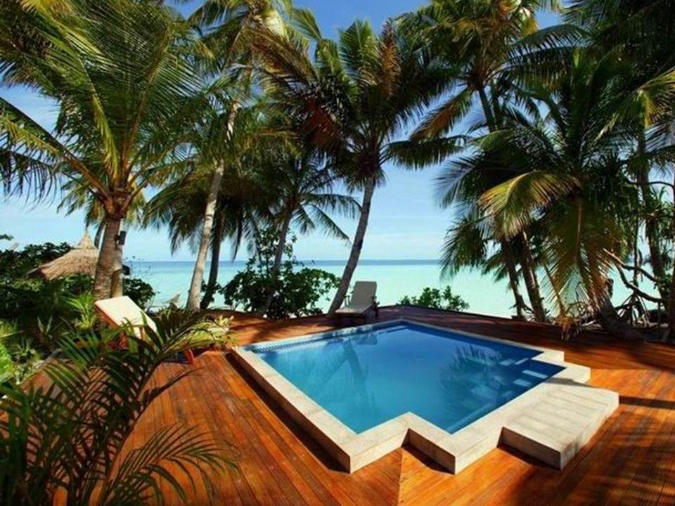 Anémoe de la Maldive