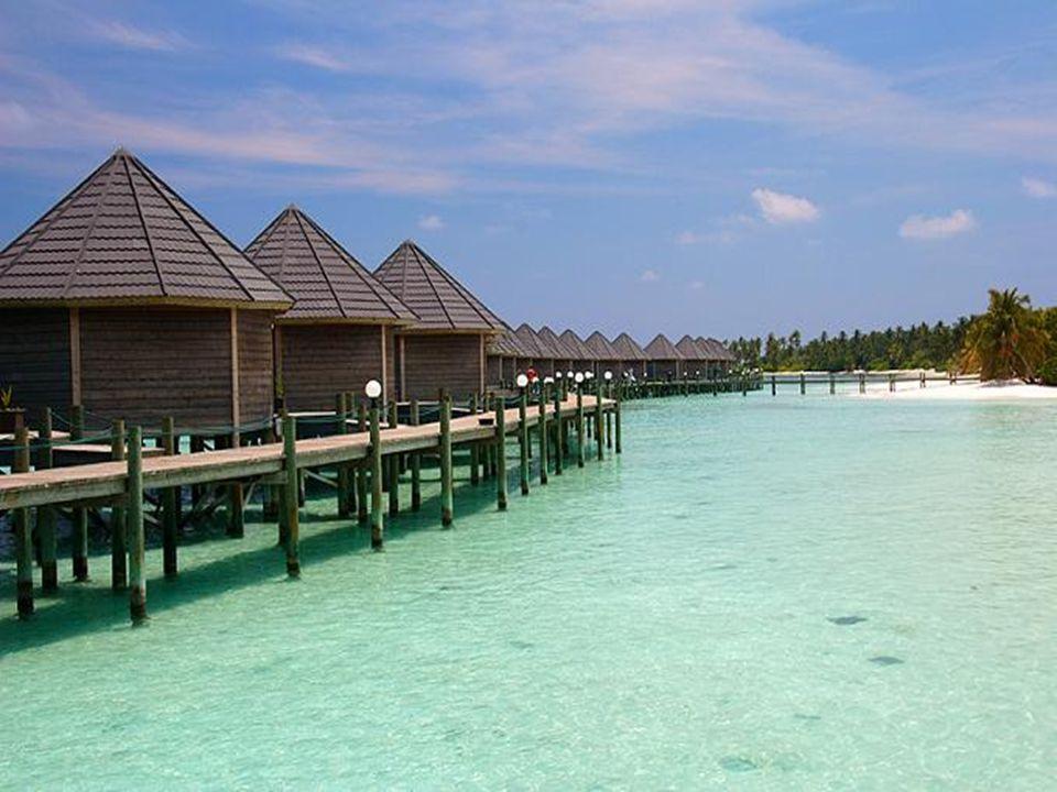 Les Maldives sont célèbres par la beauté et la rareté du monde subaquatique, la diversité des couleurs bleues de ses eaux, l'abondance et la variété d