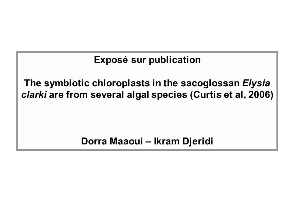 Cadre de létude Cette étude porte sur la détermination de la source des chloroplastes séquestrés chez une espèce de Sacoglosse : Elysia clarki.