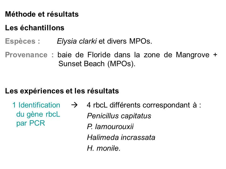 Méthode et résultats Les échantillons Espèces : Elysia clarki et divers MPOs.