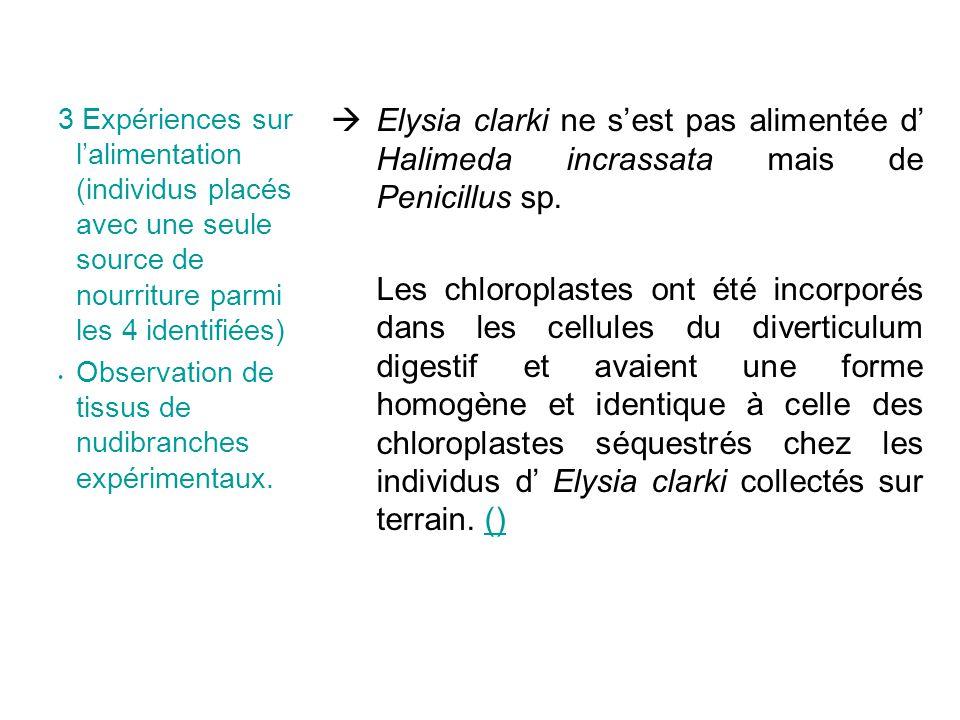 3 Expériences sur lalimentation (individus placés avec une seule source de nourriture parmi les 4 identifiées) Observation de tissus de nudibranches expérimentaux.