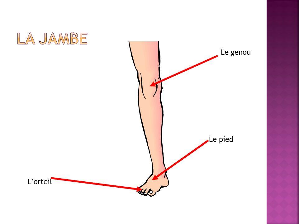 Lorteil Le genou Le pied