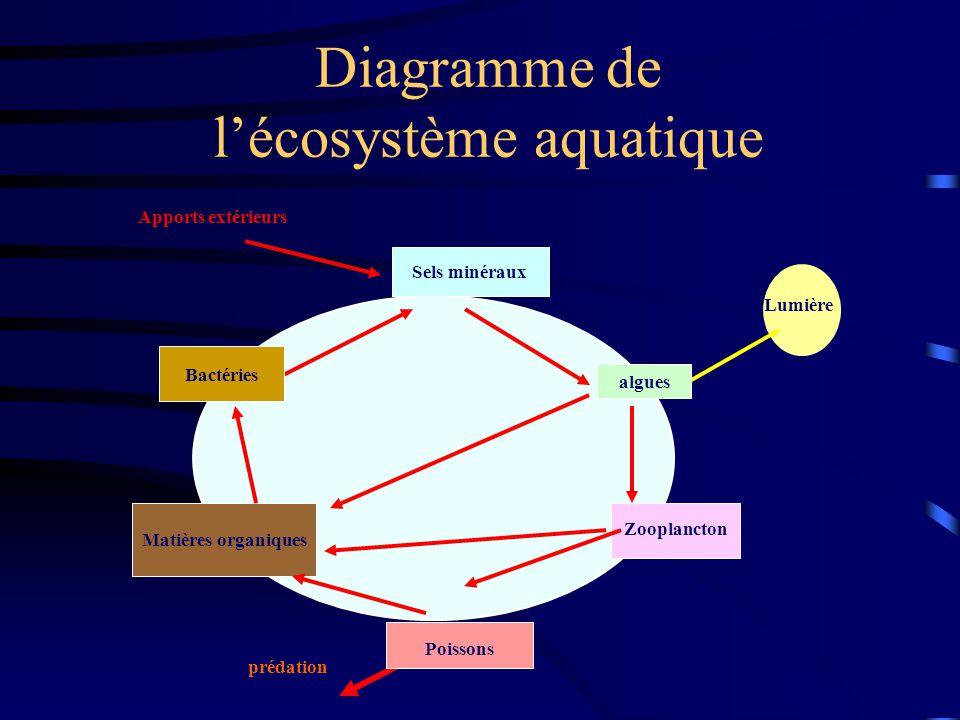 prédation Diagramme de lécosystème aquatique Matières organiques Apports extérieurs Lumière Bactéries Sels minéraux Zooplancton Poissons algues