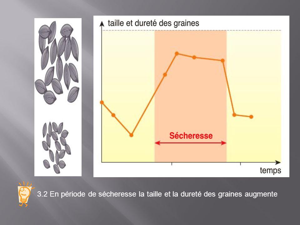 3.2 Après une période de sécheresse la population de pinsons à gros bec (possédant lallèle Bmp4 + ) augmente car ils sont capables de se nourrir à partir de grosses graines, 3.2 La sélection naturelle favorise les individus porteurs d une mutation avantageuse (Bmp4 + ) leur effectif augmente au sein de la population.