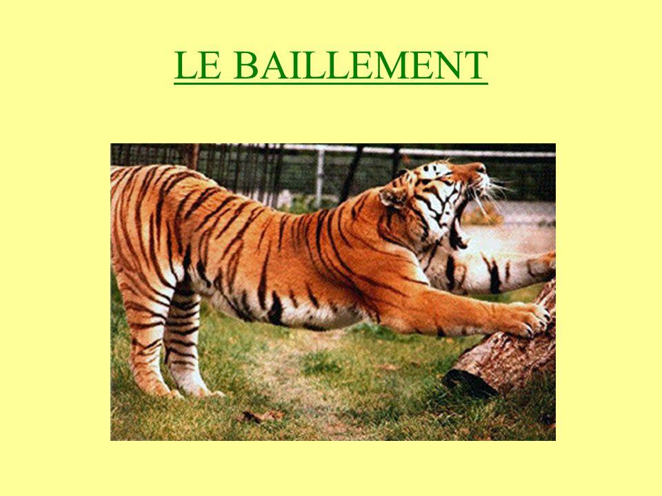LE BAILLEMENT