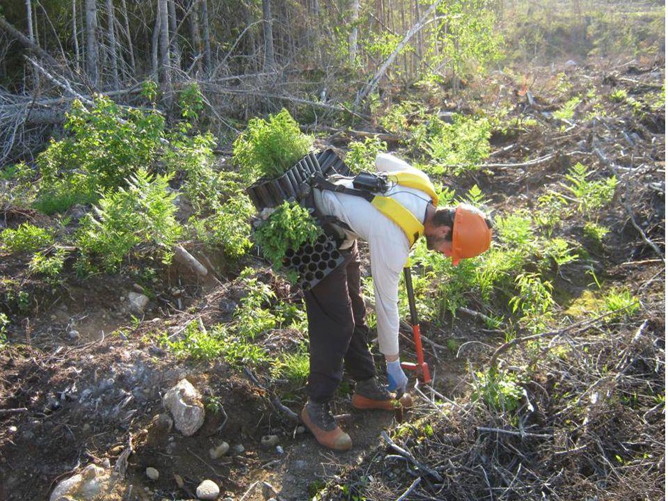 Il existe des seuils au-delà desquels la compétition influence significativement la croissance des arbres plantés EPN compétition arbustive