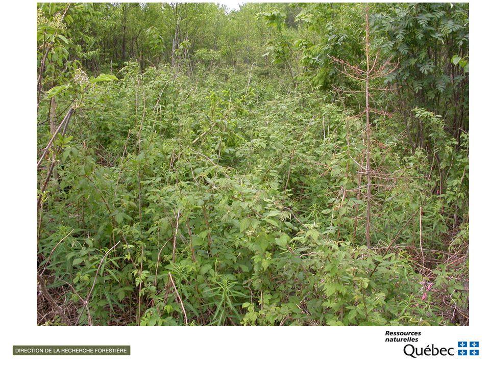 Gestion de la végétation forestière : un concept qui évolue Walstad et Koch (1987)