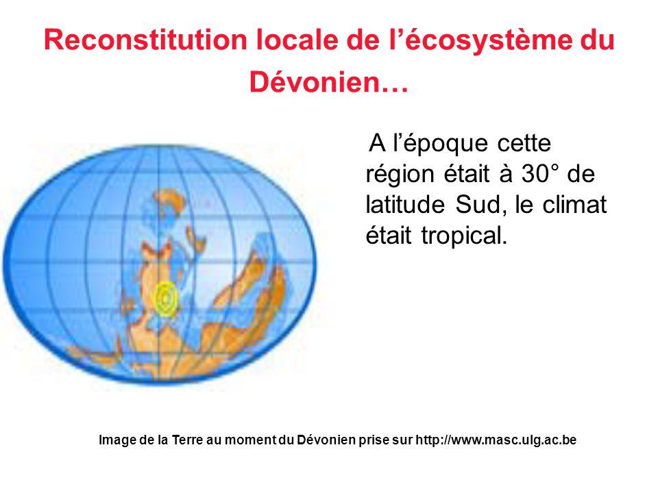 Reconstitution locale de lécosystème du Dévonien… A lépoque cette région était à 30° de latitude Sud, le climat était tropical. Image de la Terre au m