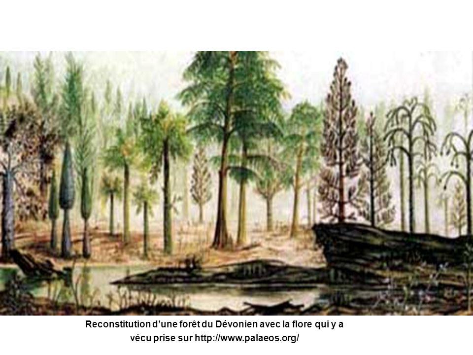 Reconstitution dune forêt du Dévonien avec la flore qui y a vécu prise sur http://www.palaeos.org/
