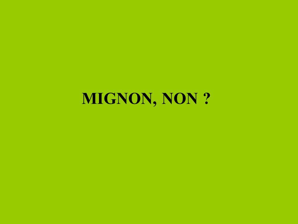 MIGNON, NON ?