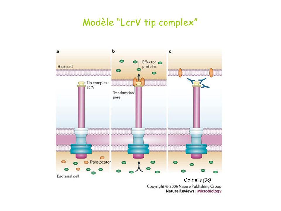Cornelis (06) Modèle LcrV tip complex
