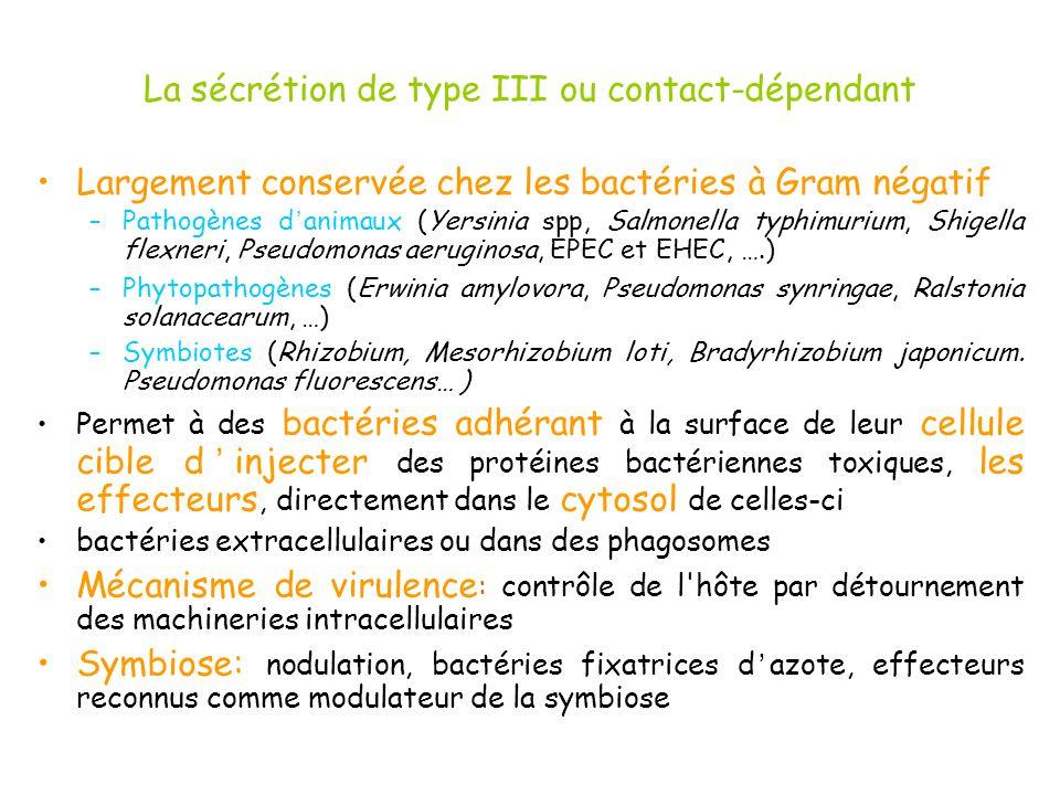 La sécrétion de type III ou contact-dépendant Largement conservée chez les bactéries à Gram négatif –Pathogènes d animaux (Yersinia spp, Salmonella ty