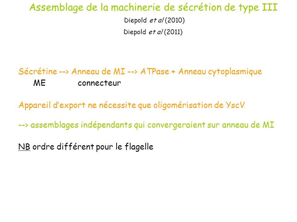 Assemblage de la machinerie de sécrétion de type III Diepold et al (2010) Diepold et al (2011) Sécrétine --> Anneau de MI --> ATPase + Anneau cytoplas