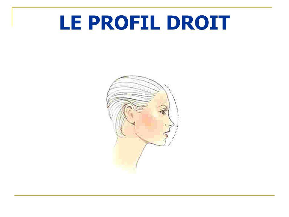 LE PROFIL DROIT