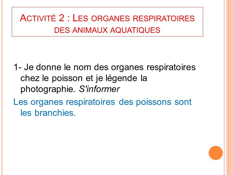 A CTIVITÉ 2 : L ES ORGANES RESPIRATOIRES DES ANIMAUX AQUATIQUES 1- Je donne le nom des organes respiratoires chez le poisson et je légende la photogra