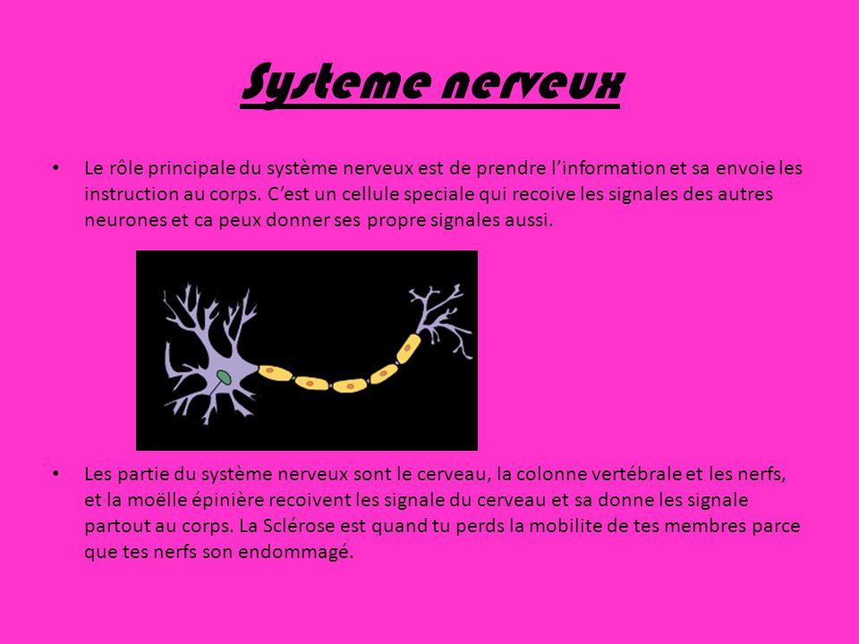 Systeme nerveux Le rôle principale du système nerveux est de prendre linformation et sa envoie les instruction au corps. Cest un cellule speciale qui