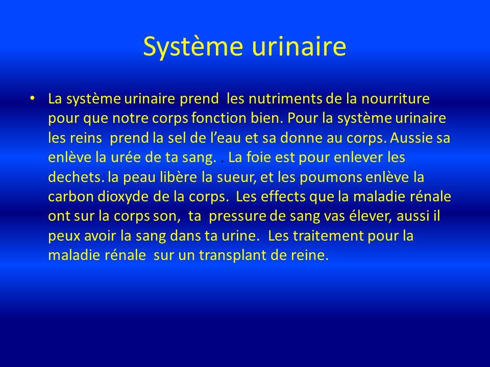 La système urinaire prend les nutriments de la nourriture pour que notre corps fonction bien. Pour la système urinaire les reins prend la sel de leau