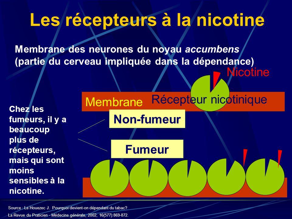 Membrane Les récepteurs à la nicotine Non-fumeur Fumeur Membrane des neurones du noyau accumbens (partie du cerveau impliquée dans la dépendance) Chez les fumeurs, il y a beaucoup plus de récepteurs, mais qui sont moins sensibles à la nicotine.