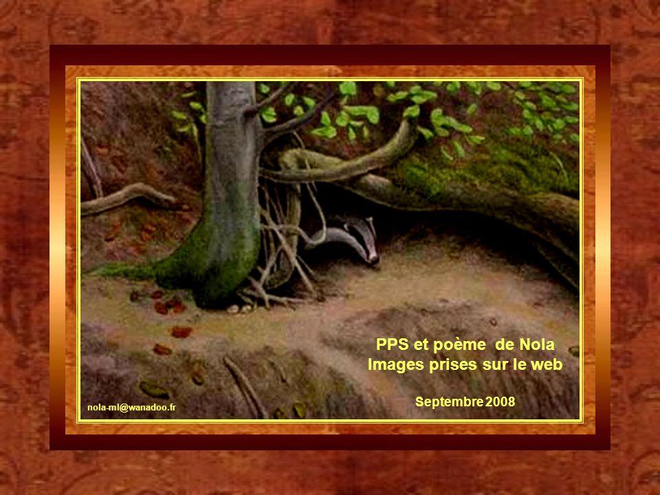 Le blaireau est la plus grosse espèce de mustélidé d'Europe. Il est trapu et peut atteindre 70 cm de long (90 cm avec la queue) pour une vingtaine de
