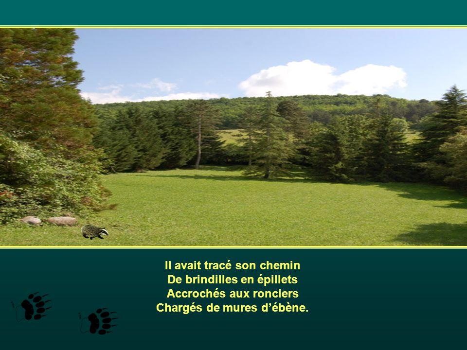 A flanc de coteau, face au sud, Dans locre brulé de soleil, Il avait laissé sa trace, En transportant sans doute Lherbe sèche pour sa litière