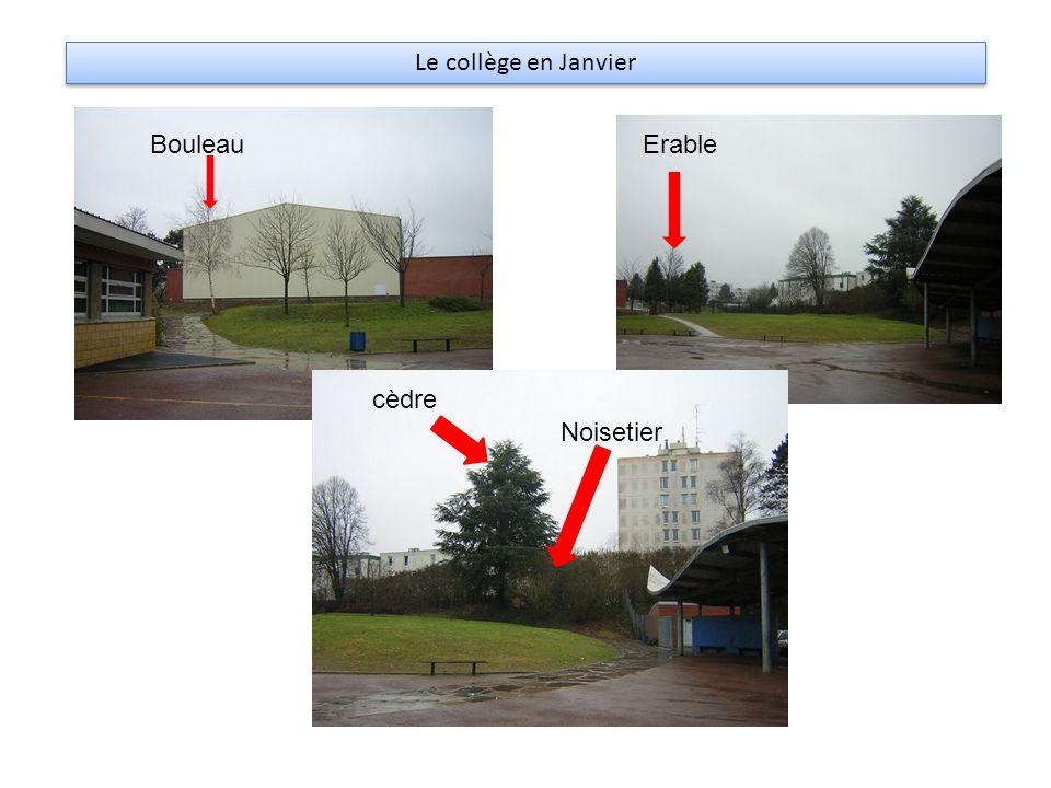 Le collège en Janvier BouleauErable cèdre Noisetier