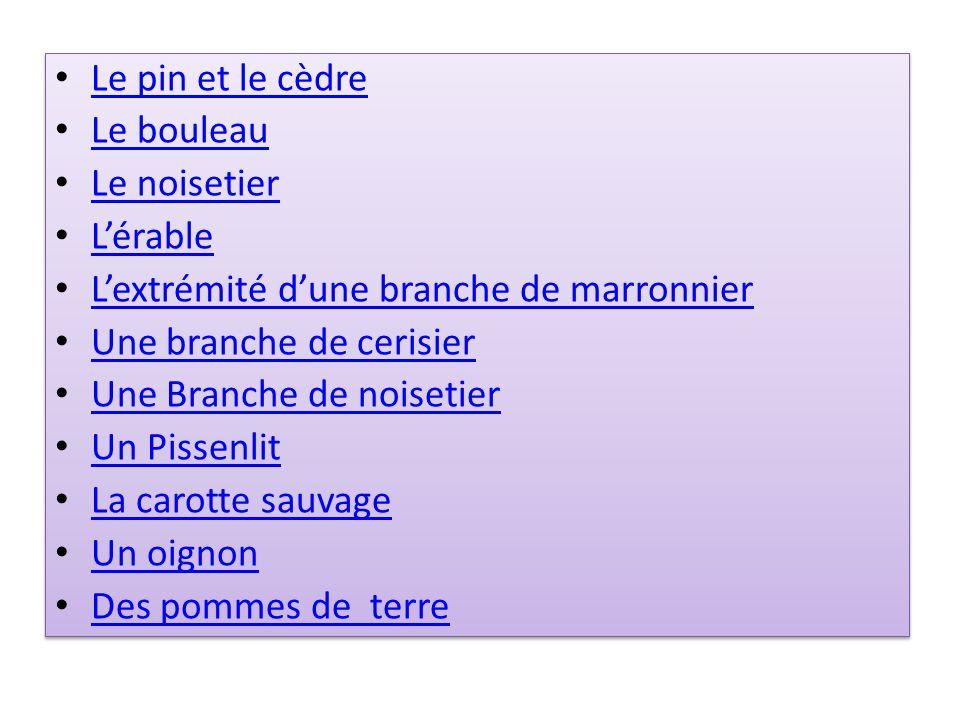 Le pin et le cèdre Le bouleau Le noisetier Lérable Lextrémité dune branche de marronnier Une branche de cerisier Une Branche de noisetier Un Pissenlit
