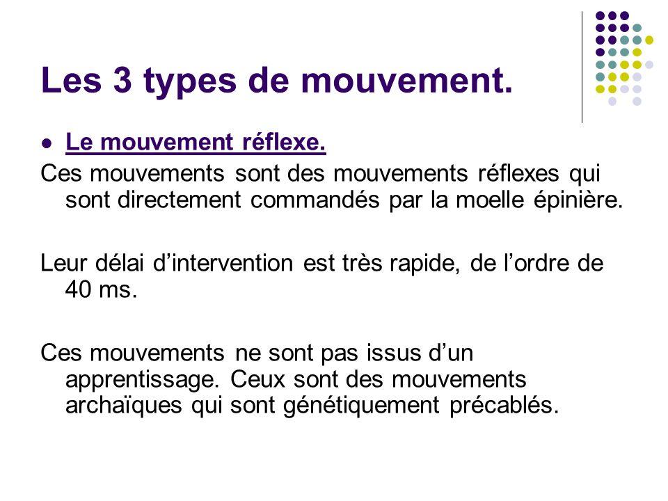 Les 3 types de mouvement. Le mouvement réflexe. Ces mouvements sont des mouvements réflexes qui sont directement commandés par la moelle épinière. Leu