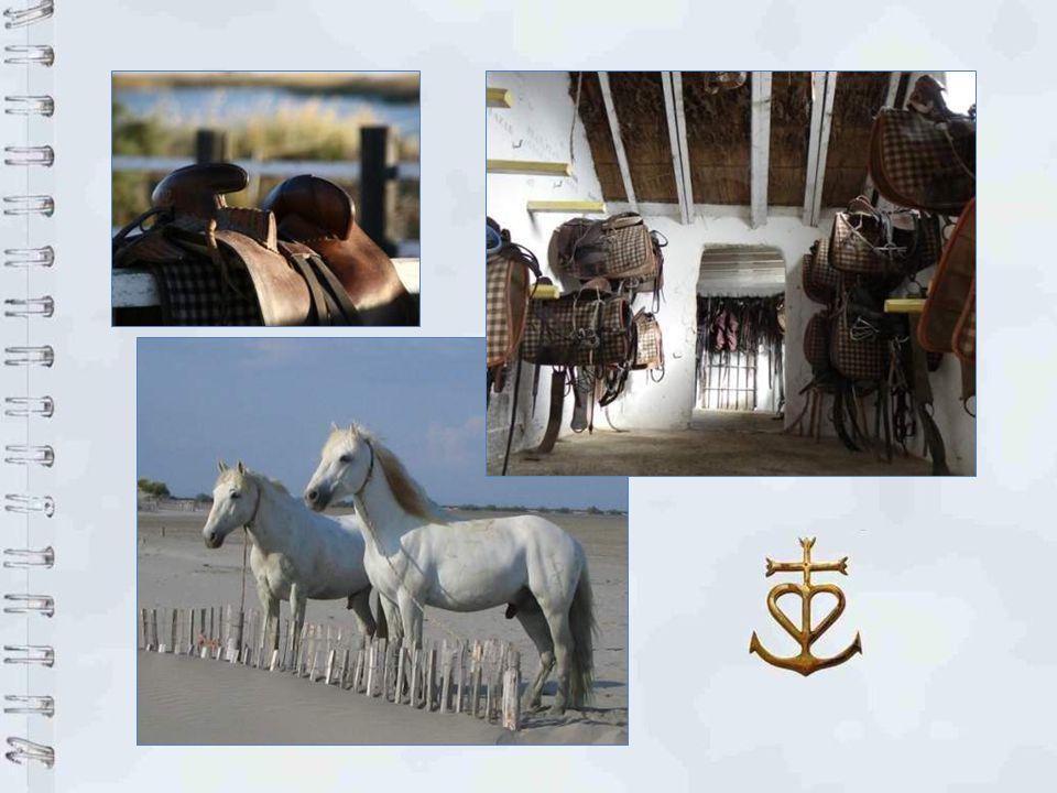Le cheval et ses gardians