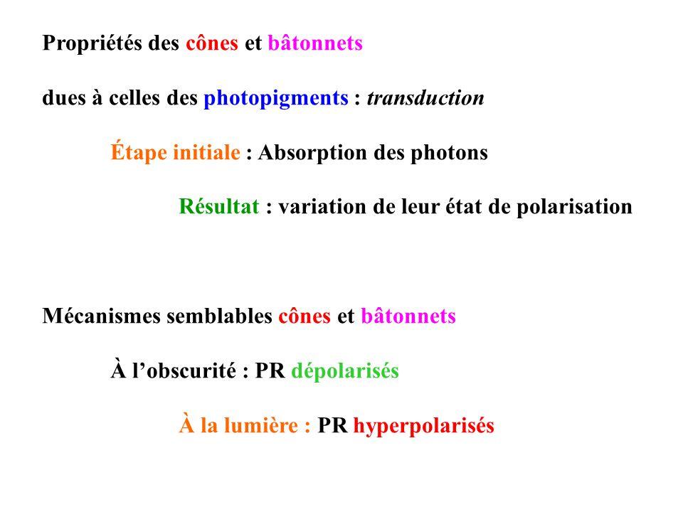 Propriétés des cônes et bâtonnets dues à celles des photopigments : transduction Étape initiale : Absorption des photons Résultat : variation de leur état de polarisation Mécanismes semblables cônes et bâtonnets À lobscurité : PR dépolarisés À la lumière : PR hyperpolarisés