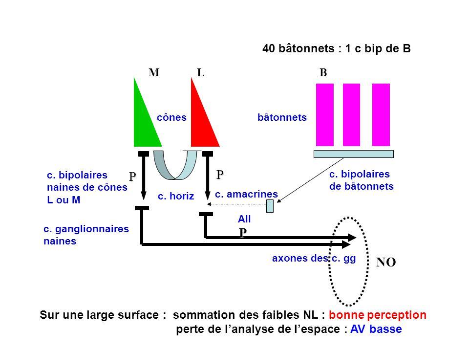 Sur une large surface : sommation des faibles NL : bonne perception perte de lanalyse de lespace : AV basse NO MLB P P P cônesbâtonnets c.