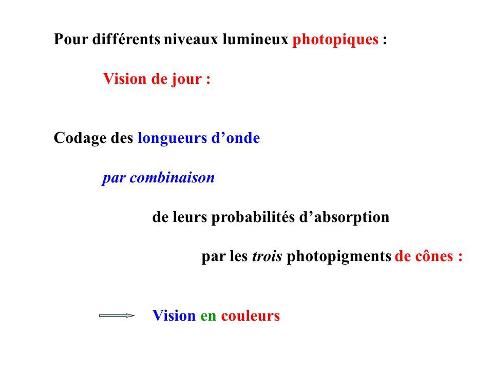 Pour différents niveaux lumineux photopiques : Vision de jour : Codage des longueurs donde par combinaison de leurs probabilités dabsorption par les trois photopigments de cônes : Vision en couleurs