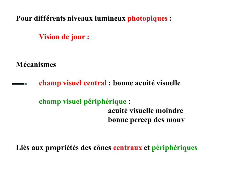 Pour différents niveaux lumineux photopiques : Vision de jour : Mécanismes champ visuel central : bonne acuité visuelle champ visuel périphérique : acuité visuelle moindre bonne percep des mouv Liés aux propriétés des cônes centraux et périphériques