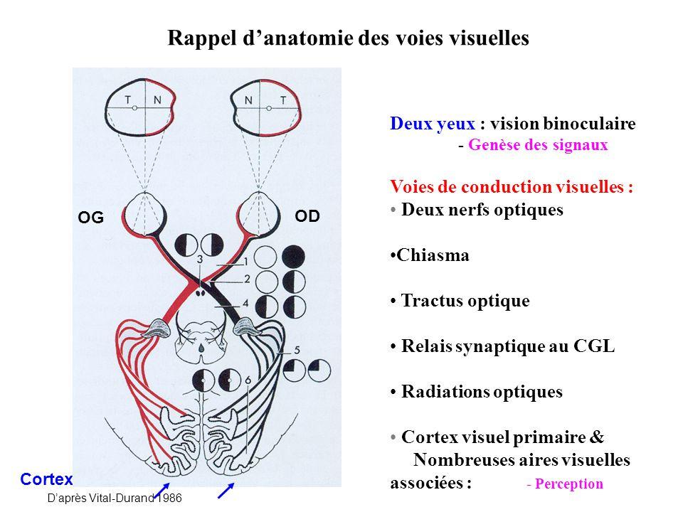 Rappel sur le stimulus du système visuel : Stimulation qui aboutit à une sensation La lumière visible : Gamme restreinte de longueurs donde 400 nm – 700 nm Gamme étendue de niveaux lumineux