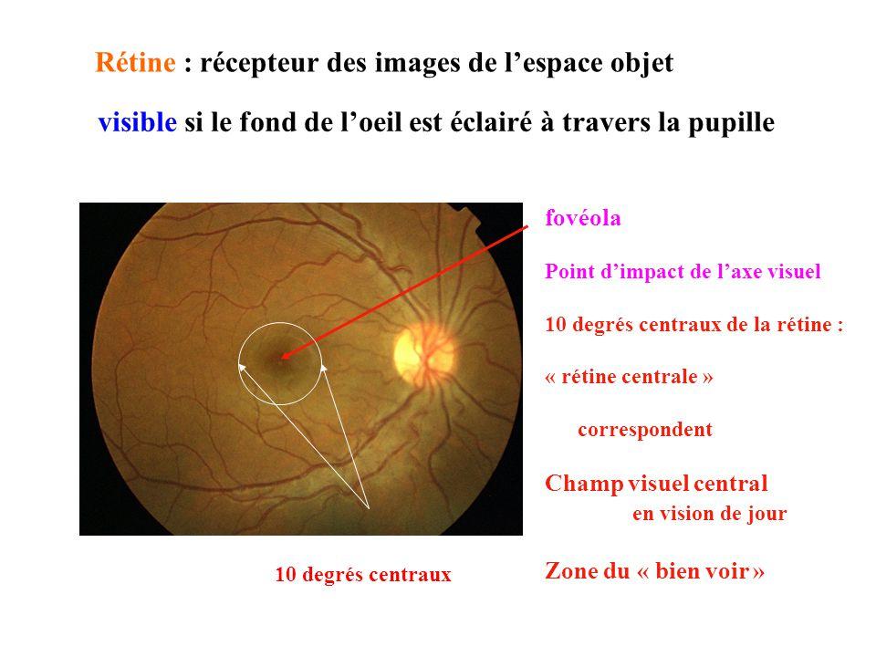 Rétine : récepteur des images de lespace objet 10 degrés centraux En dehors de la zone centrale Images projetées sur Le pôle postérieur ou « rétine périphérique » correspond Champ visuel périphérique en vision de jour « zone dalerte » … Déclenche les mouv des yeux ou de la tête image : zone centrale visible si le fond de loeil est éclairé à travers la pupille