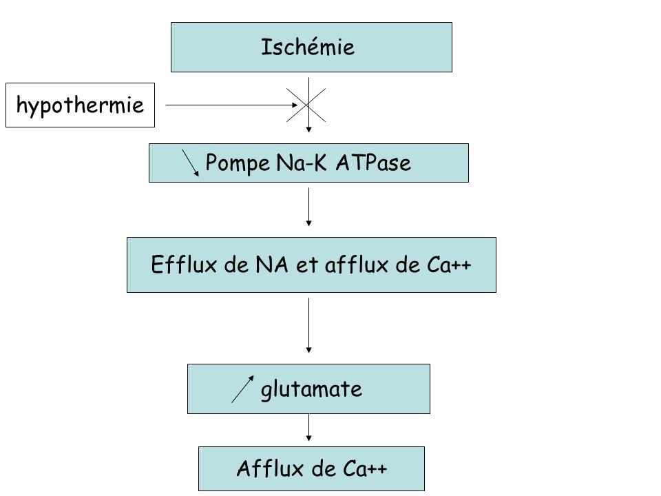 Ischémie Pompe Na-K ATPase Efflux de NA et afflux de Ca++ glutamate Afflux de Ca++ hypothermie