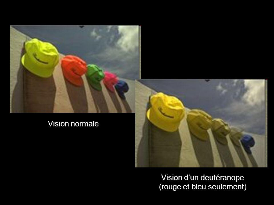 Vision normale Vision dun deutéranope (rouge et bleu seulement)