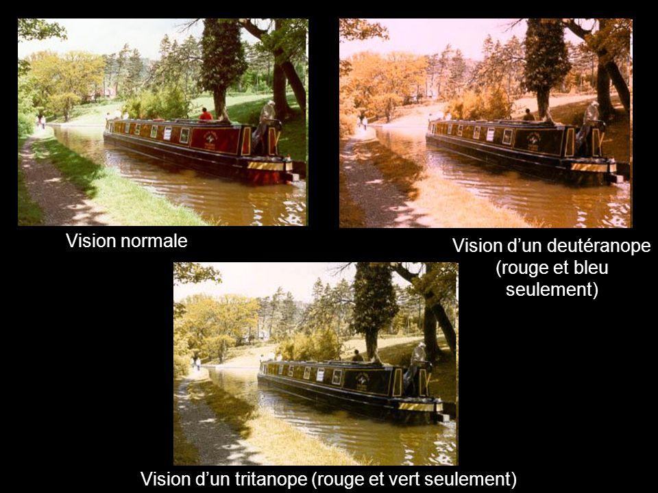 Vision normale Vision dun tritanope (rouge et vert seulement) Vision dun deutéranope (rouge et bleu seulement)