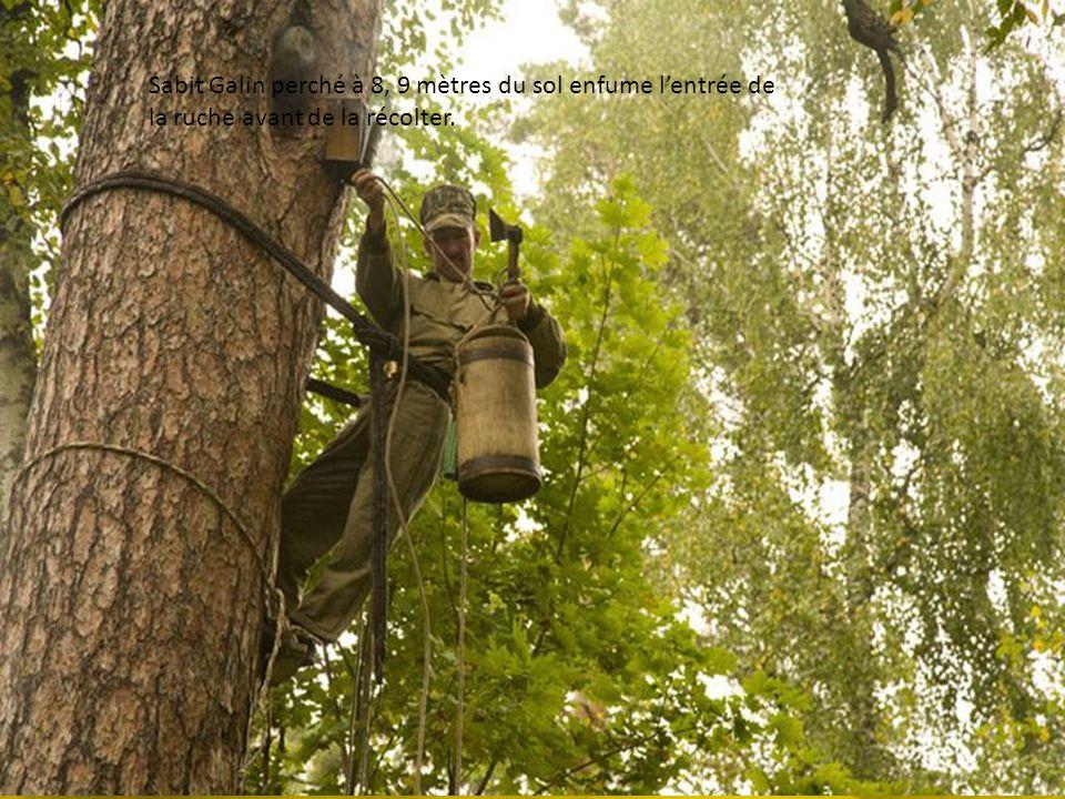 Sabit Galin en pleine récolte chasse les abeilles avec son enfumoir. Labeille Burzyan est particulièrement douce et attaque rarement un apiculteur mét