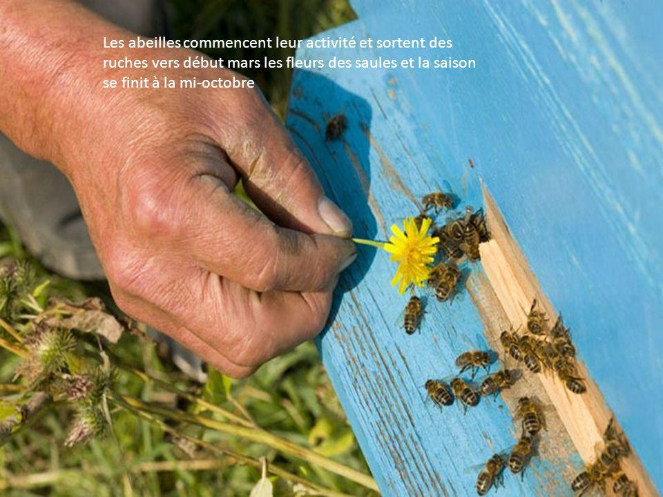 Rafic Yumaguzhin entouré de ses élèves ouvrent une ruche au rucher de lécole secondaire de Gadel-Gareyero.Les Bachkirs apprécient le courage, le savoi