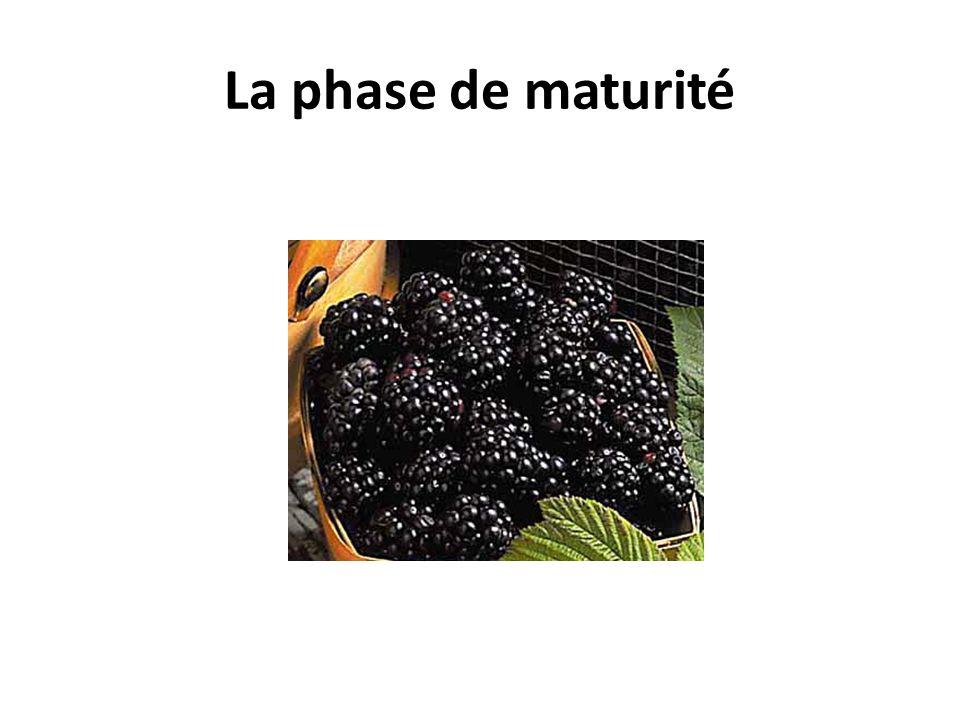 La phase de maturité