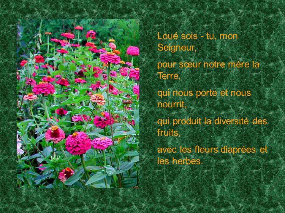 Loué sois - tu, mon Seigneur, pour sœur notre mère la Terre, qui nous porte et nous nourrit, qui produit la diversité des fruits, avec les fleurs diaprées et les herbes.