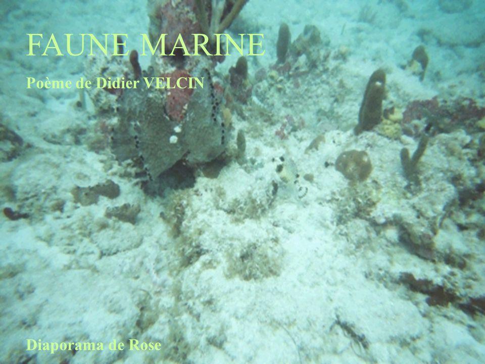 FAUNE MARINE Poème de Didier VELCIN Diaporama de Rose