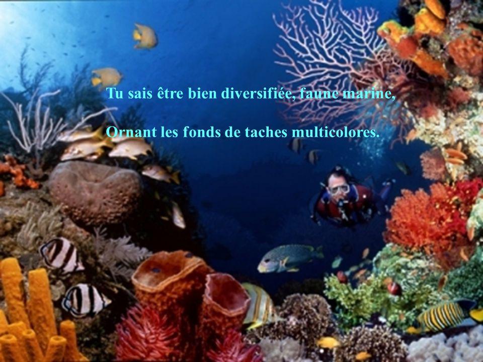 Tu sais être bien diversifiée, faune marine, Ornant les fonds de taches multicolores.