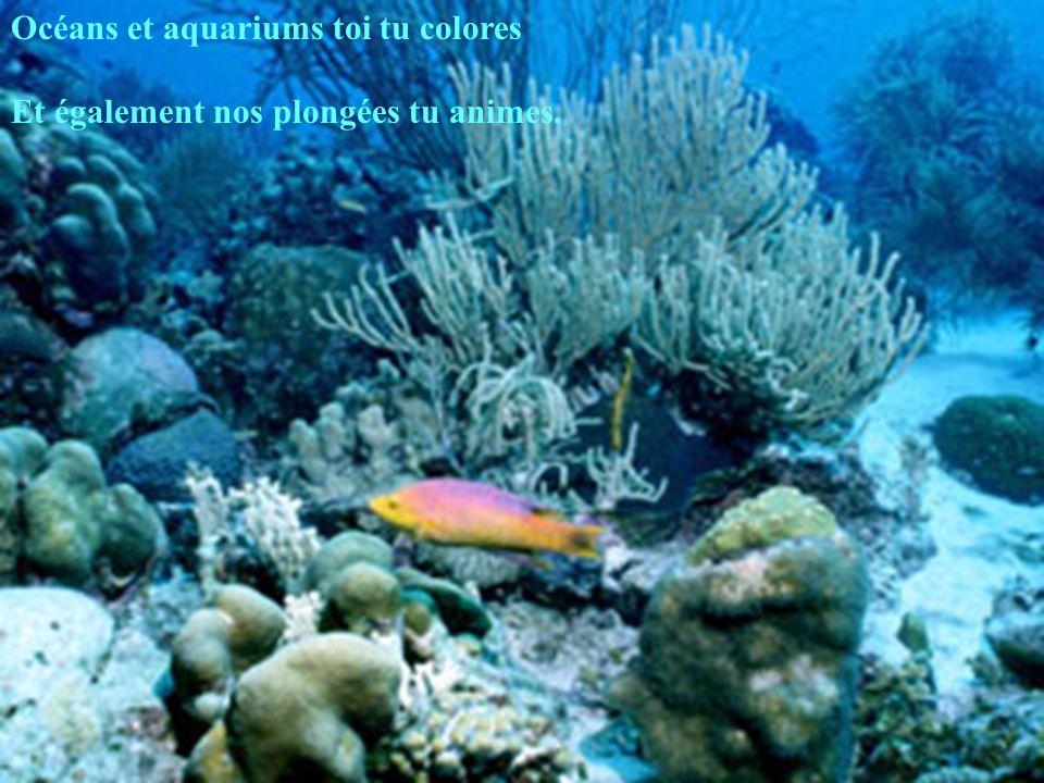 Océans et aquariums toi tu colores Et également nos plongées tu animes.