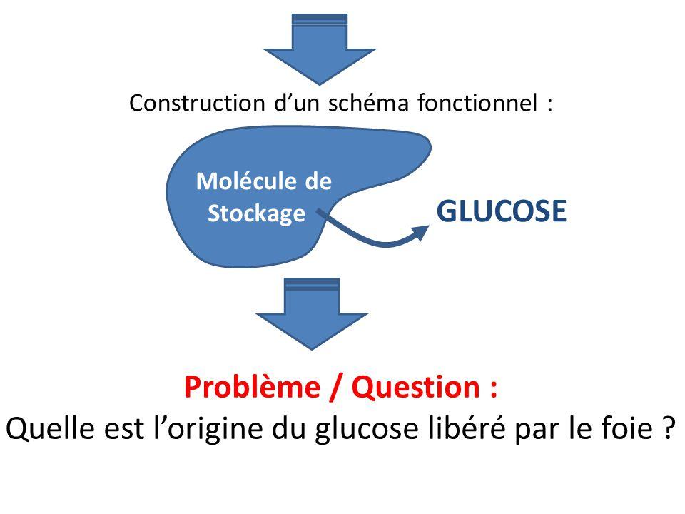Construction dun schéma fonctionnel : Problème / Question : Quelle est lorigine du glucose libéré par le foie ? Molécule de Stockage GLUCOSE