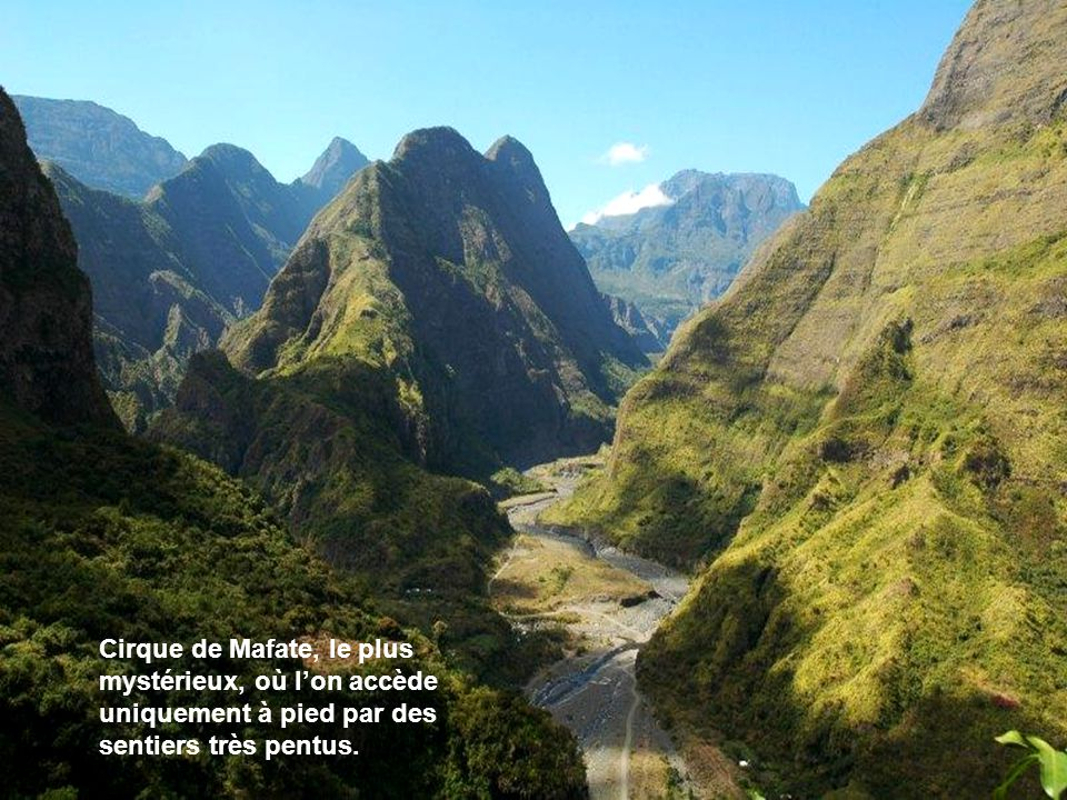 Tarier de la Réunion